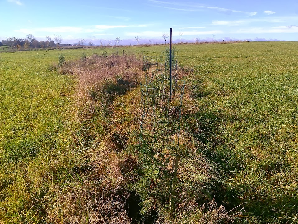 distance plantation haie
