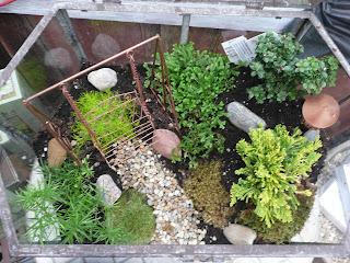Lets Grow Fairy Garden Terrarium