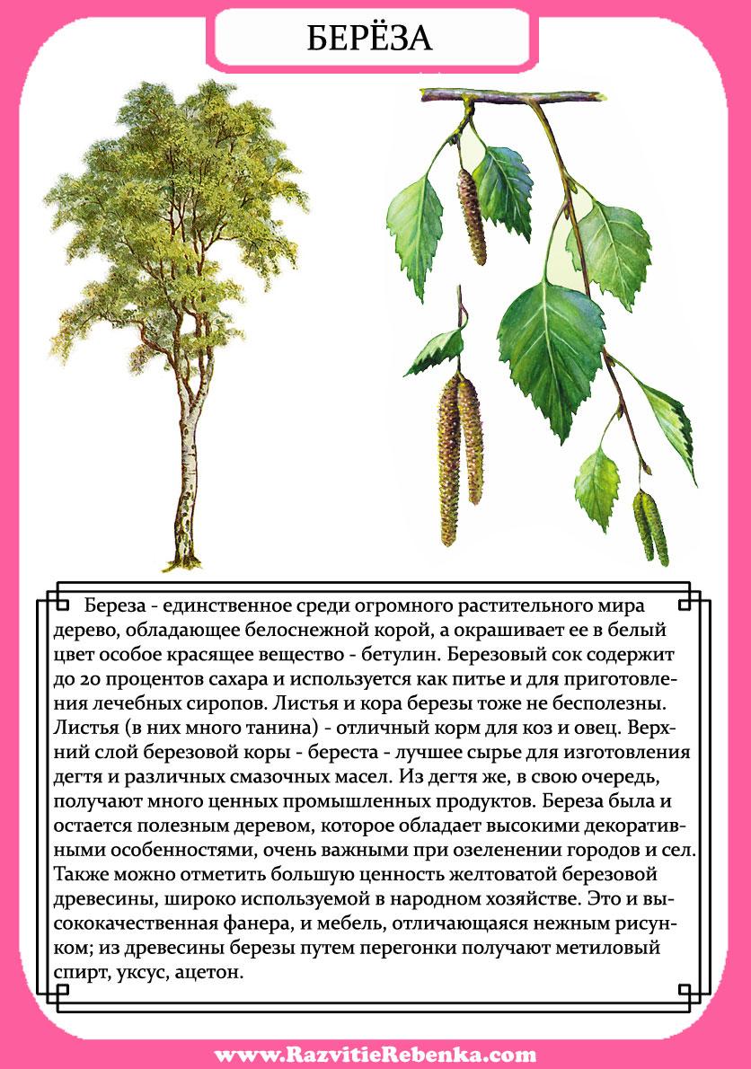 их и описание картинках в деревья