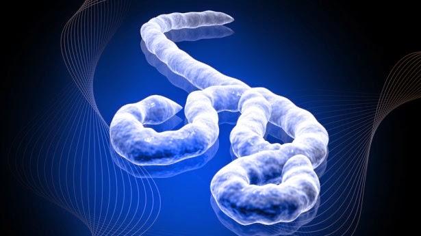 bufala virus ebola