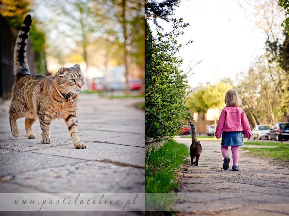 koty na Saskiej Kępie