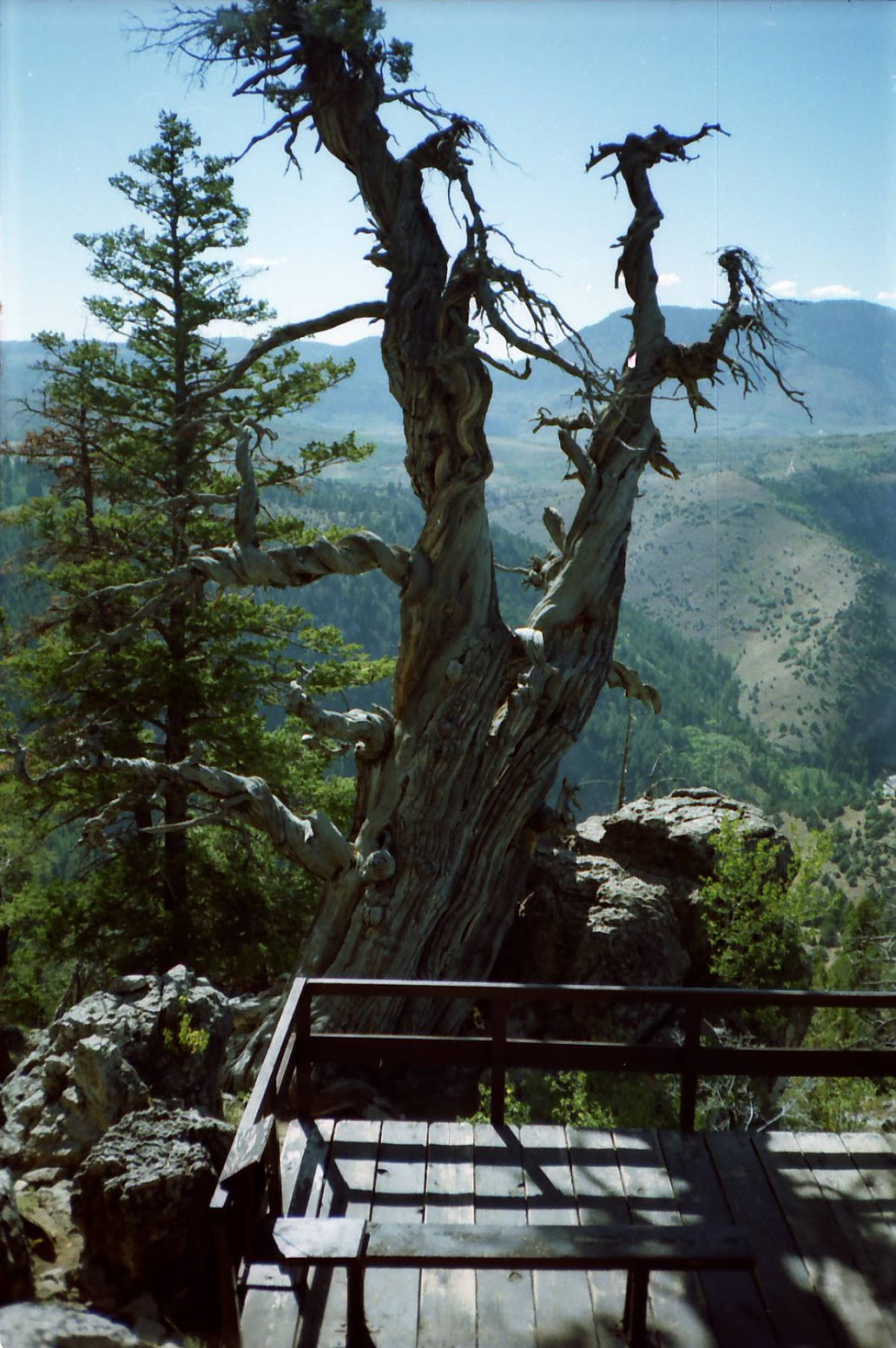 The mystery of utah history logan canyon tree outdates for Jardin jardine