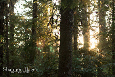 Shannon Hager Photography, Oregon Forest