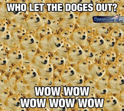 funny dogs humor pics