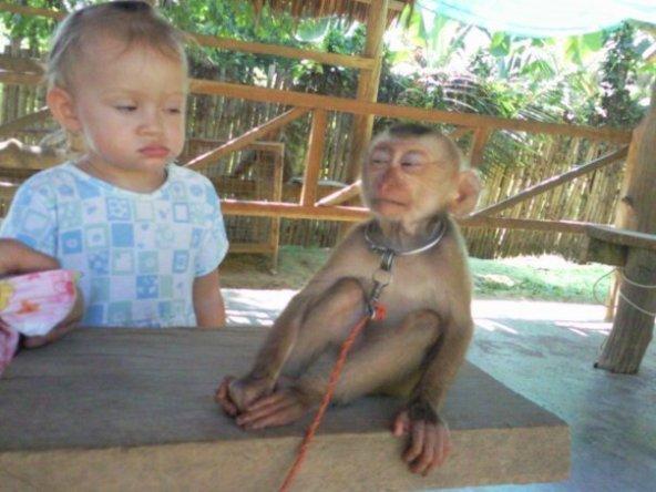cinta monyet sukar