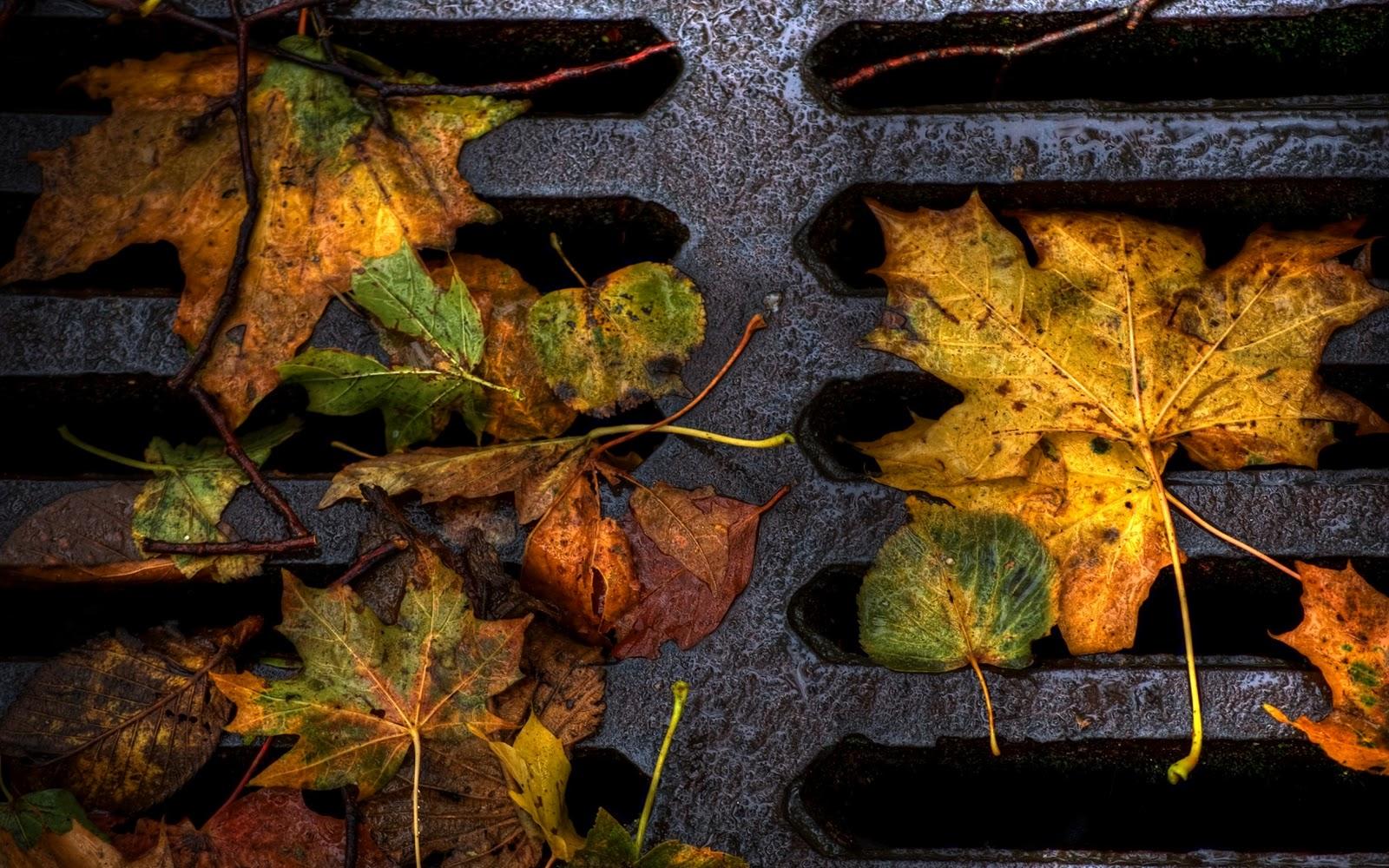 The best top autumn desktop wallpapers 19 En Güzel Sonbahar HD Duvar Kağıtları