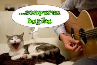 gambar kucing sedang menyanyi