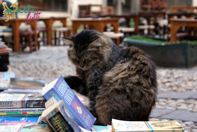Stambuł - Taksim