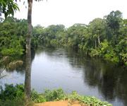 Salonga National Park Congo