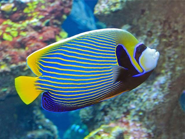 entre peces y corales por andres corral mi primer acuario