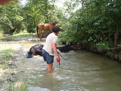 Orawa, Lipnica Wielka, konie, kucyki, pławienie koni w rzece, susza, brak wody