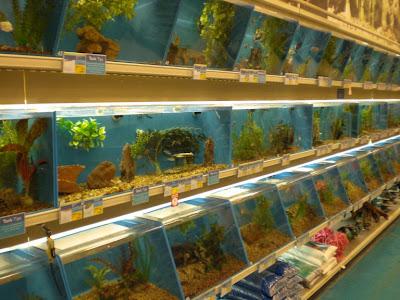 Cuidado de acuarios los peces donde comprarlos for 1 fish 2 fish store