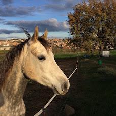 El cavall del Silet Bang