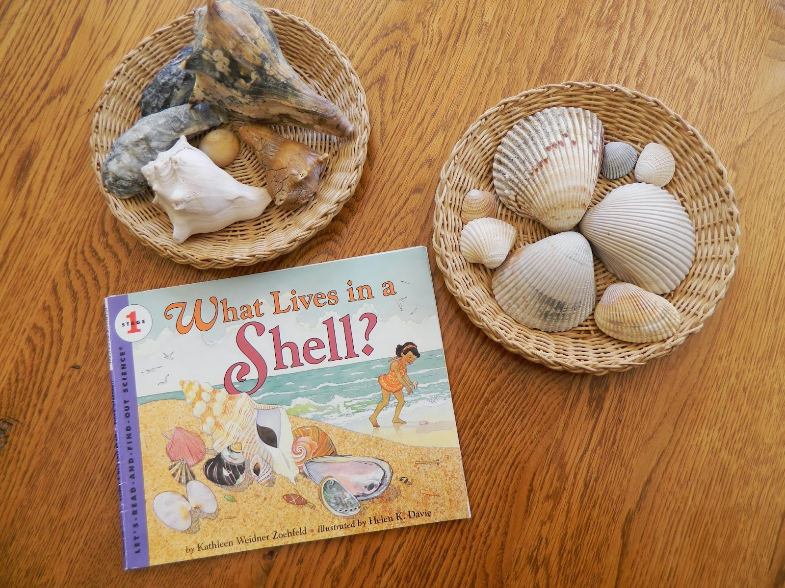 popular childrens books, all about shells