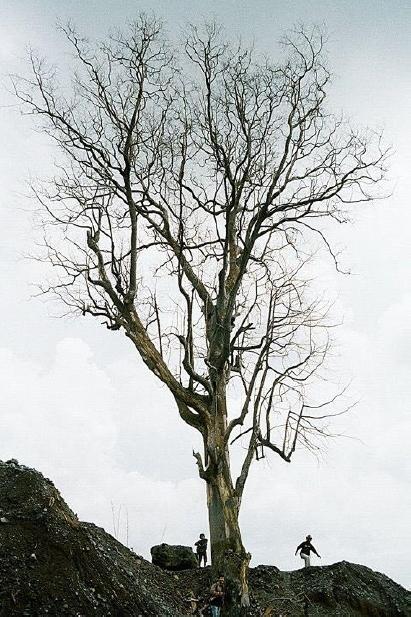 Pohon Awan Panas