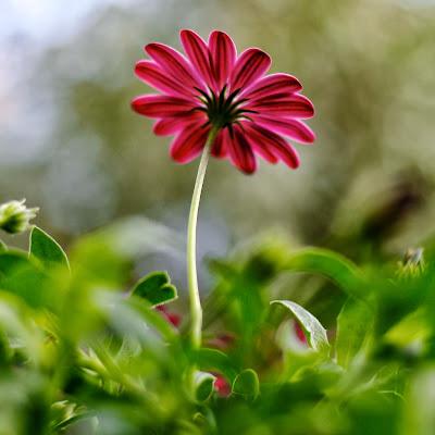 best flower image