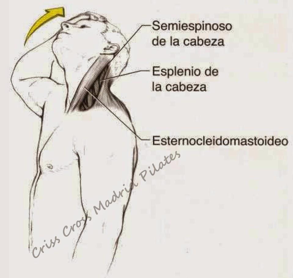 Los dolores superficiales por toda la espalda