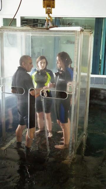 Inmersión con tiburones, acuario de Veracruz