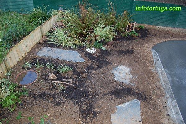 zona terrestre con algunas plantas pequeas an