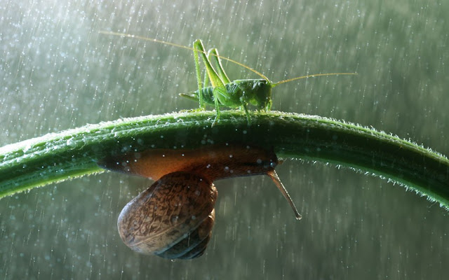 Macro photographs of snails and insects by Vadim trunov, macro photographs, snail and grasshopper