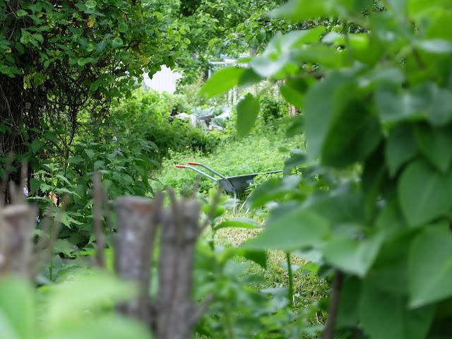 Talin siirtolapuutarha, Tali koloniträdgård
