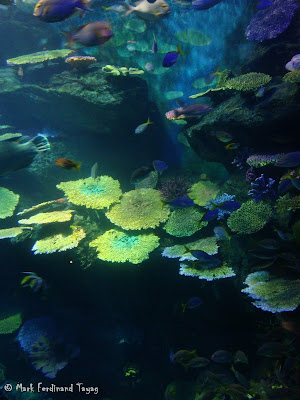 Siam Ocean World - Bangkok Photo 8