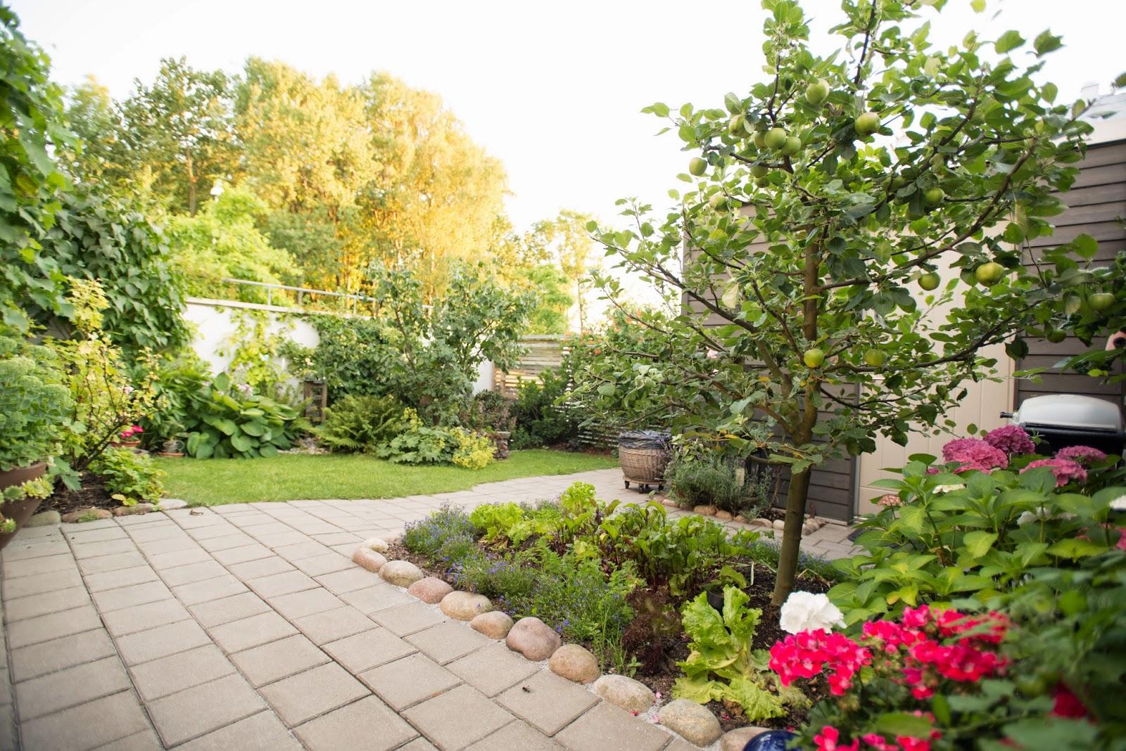 387 kvadrat : trädgård på minimal yta.