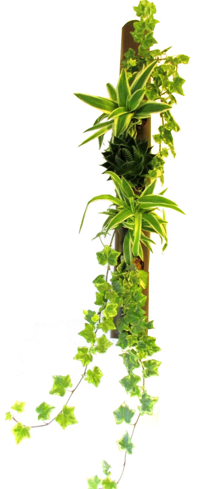 Crea vegetal bambou mikado for Plante bambou interieur