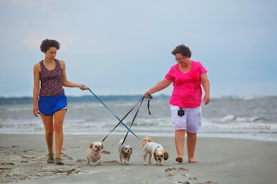 People who walk dogs are 5x more likely to make friends via their pet