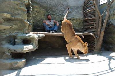 Фото Укринформ: художник и львица