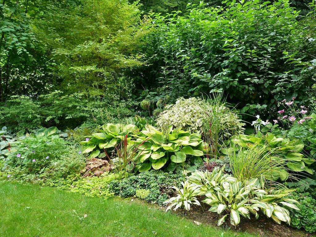 Les pins noirs choix de la couleur des feuillages 2 for Arbuste persistant ombre le havre