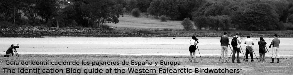 Guía de campo los pajareros de España y de Europa