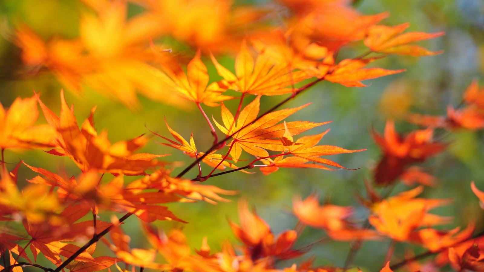 Beautiful Autumn Season Wallpapers HD | Nice Wallpapers