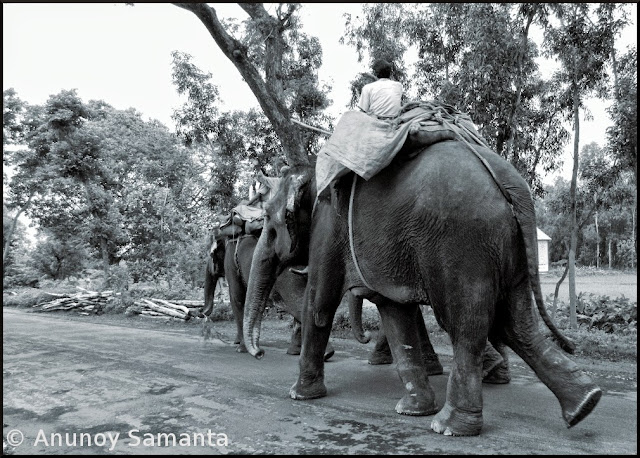 Elephants don't care for bad Roads