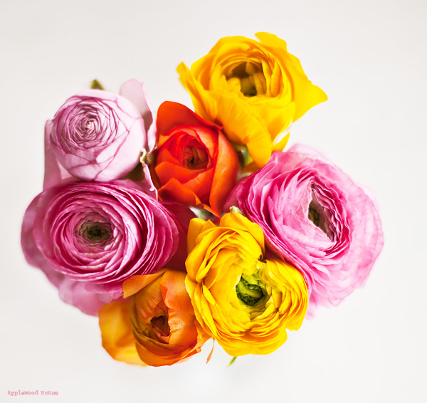 Ranunkeln Ranunculus Flowers Blumen