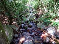 Pedres tenyides de vermell per l'aigua ferruginosa de la riera de Riells
