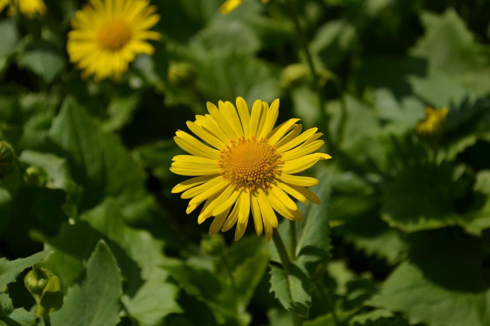 torreke 39 s way of photography gele bloemen in onze tuin