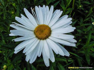 imagen flores en Galipán