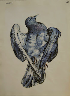 <ink, watercolor, ilustration, bird, pidgeon, Nuria Farre>