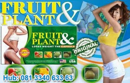 pelangsing fruit plant, fruit plant herbal, obat pelangsing herbal, pelangsing badan alami, obat pelangsing badan