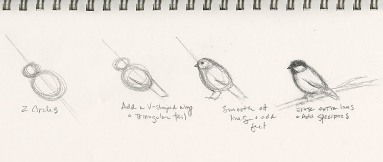 Step-by-step guide to drawing a chickadee by Kelly Riccetti