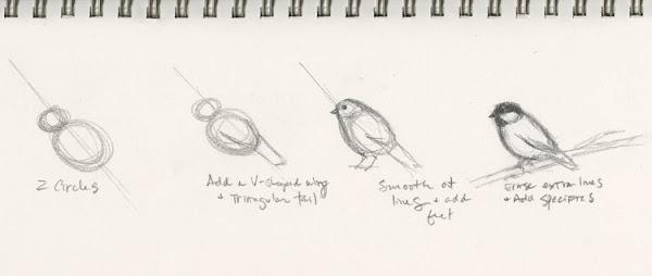How To Draw Cardinal Bird Step By