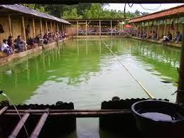 usaha kolam pemancingan