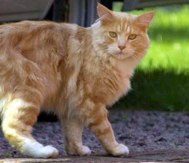 Stunning Vet Blog Should I Neuter Castrate My Male Cat With Pros And Cons  Of Cats.