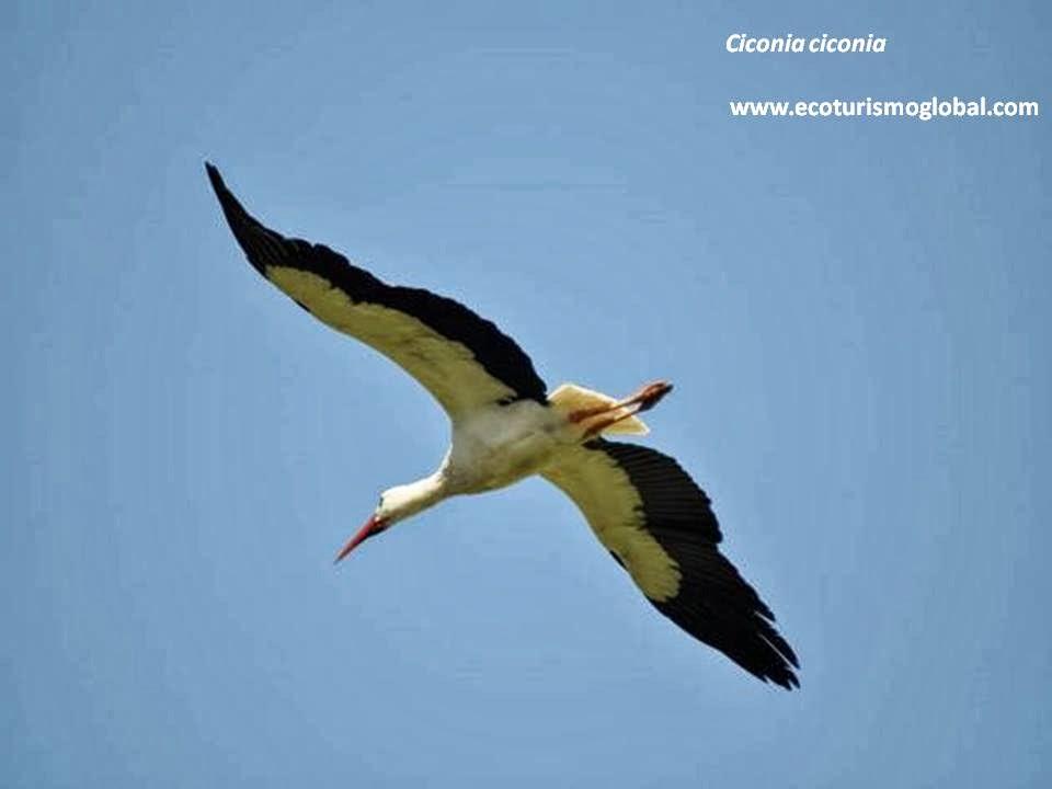http://ecoturismoglobal.com/jornadas_y_cursos