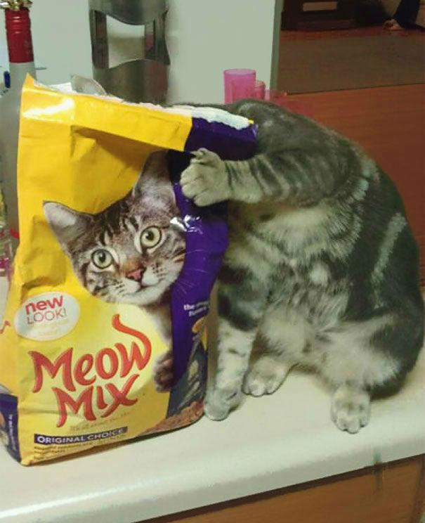 Fotos de gatos capturadas no perfeito momento para gerar divertidas imagens
