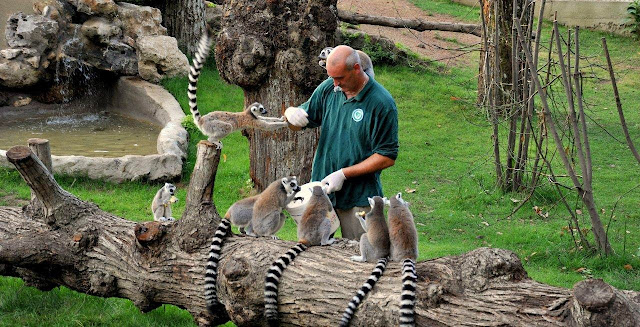 بيوباركو دي روما .. حديقة حيوان روما