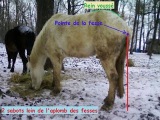 Reconnaître un cheval qui a froid.