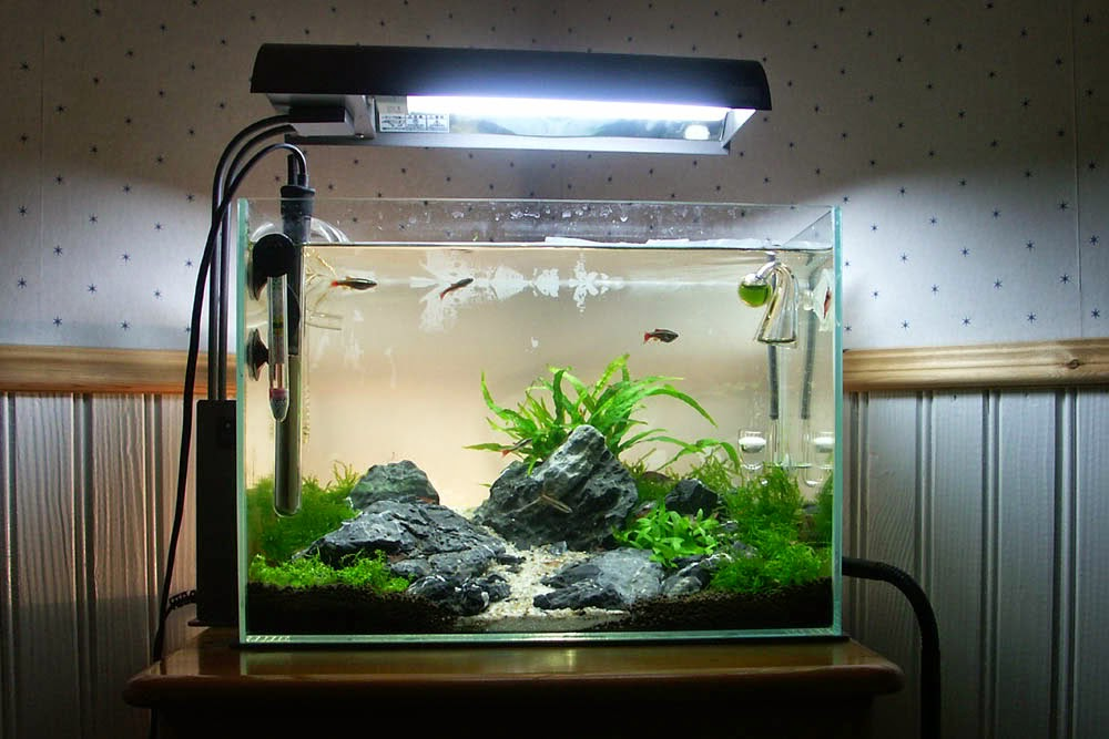 Inilah 10 Ide Kreasi Untuk Membuat Mini Aquascape | Ikan