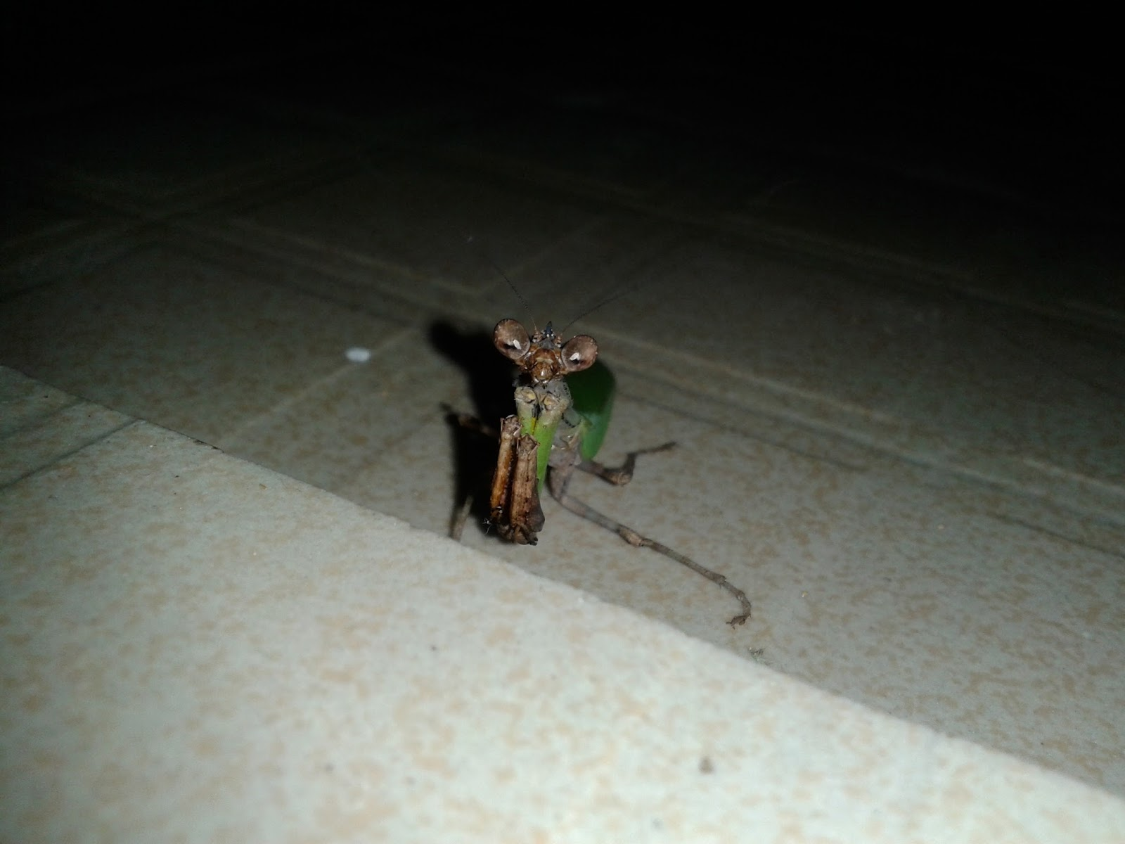 Flying beetles attracted to light